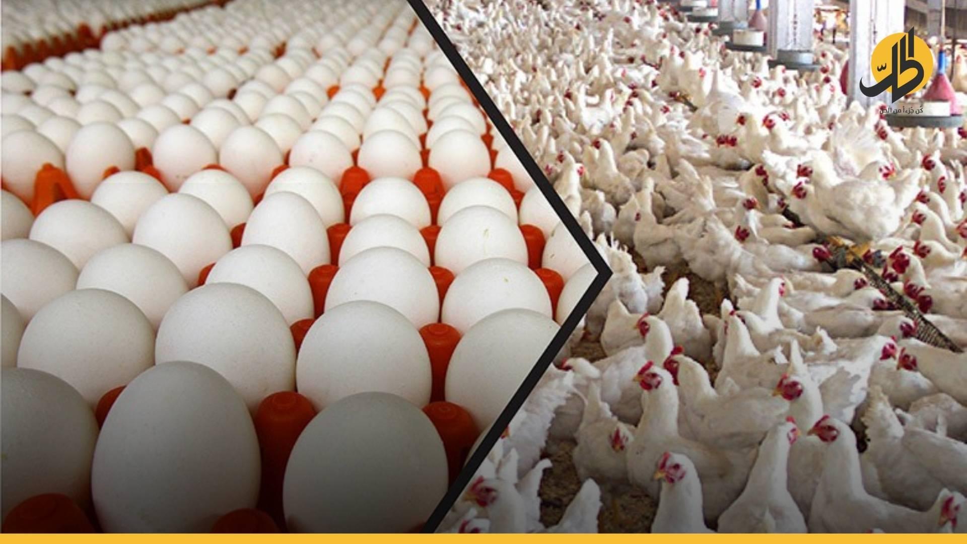 إبادةٌ جماعية للدجاجِ في درعا والبيض يتجه نحو الانقراض