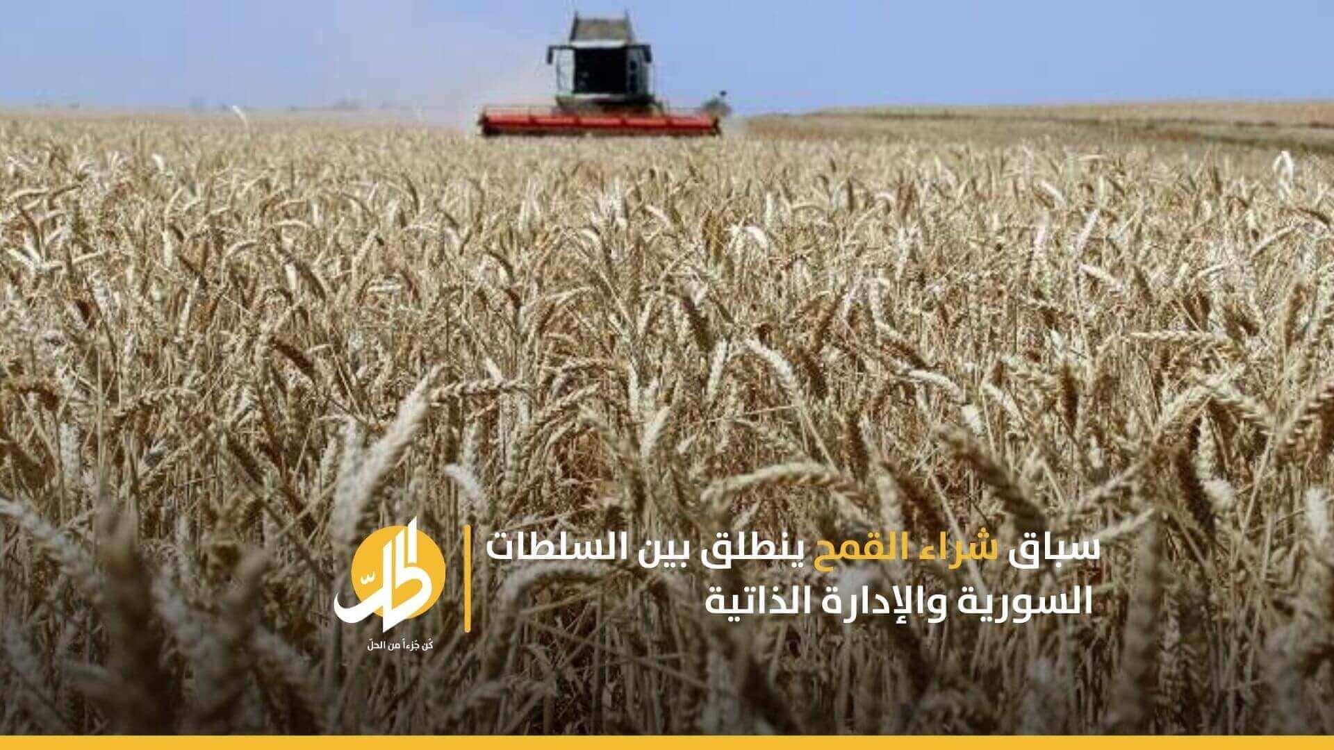 سباق شراء القمح ينطلق بين السلطات السورية والإدارة الذاتية
