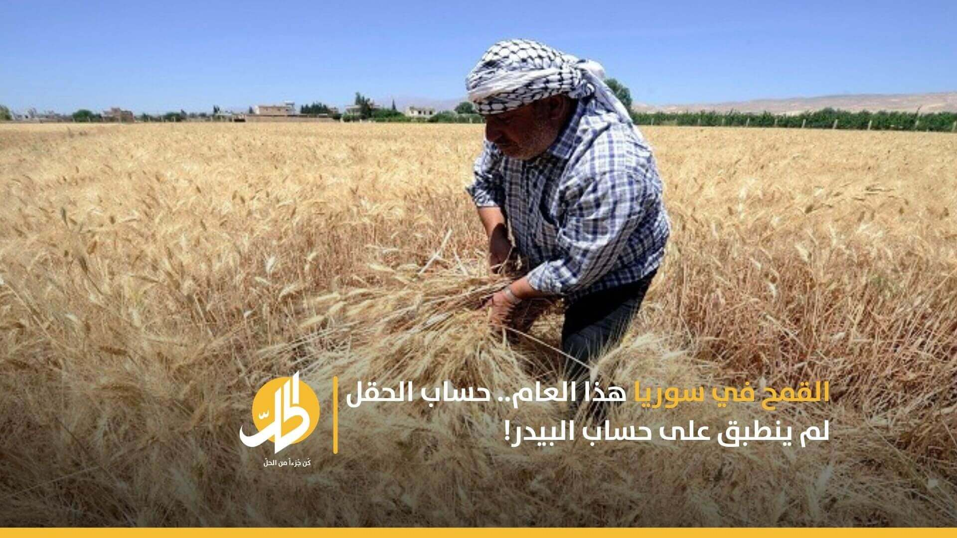 موسم القمح في سوريا هذا العام.. واختلاف حسابات الحقل والبيدر