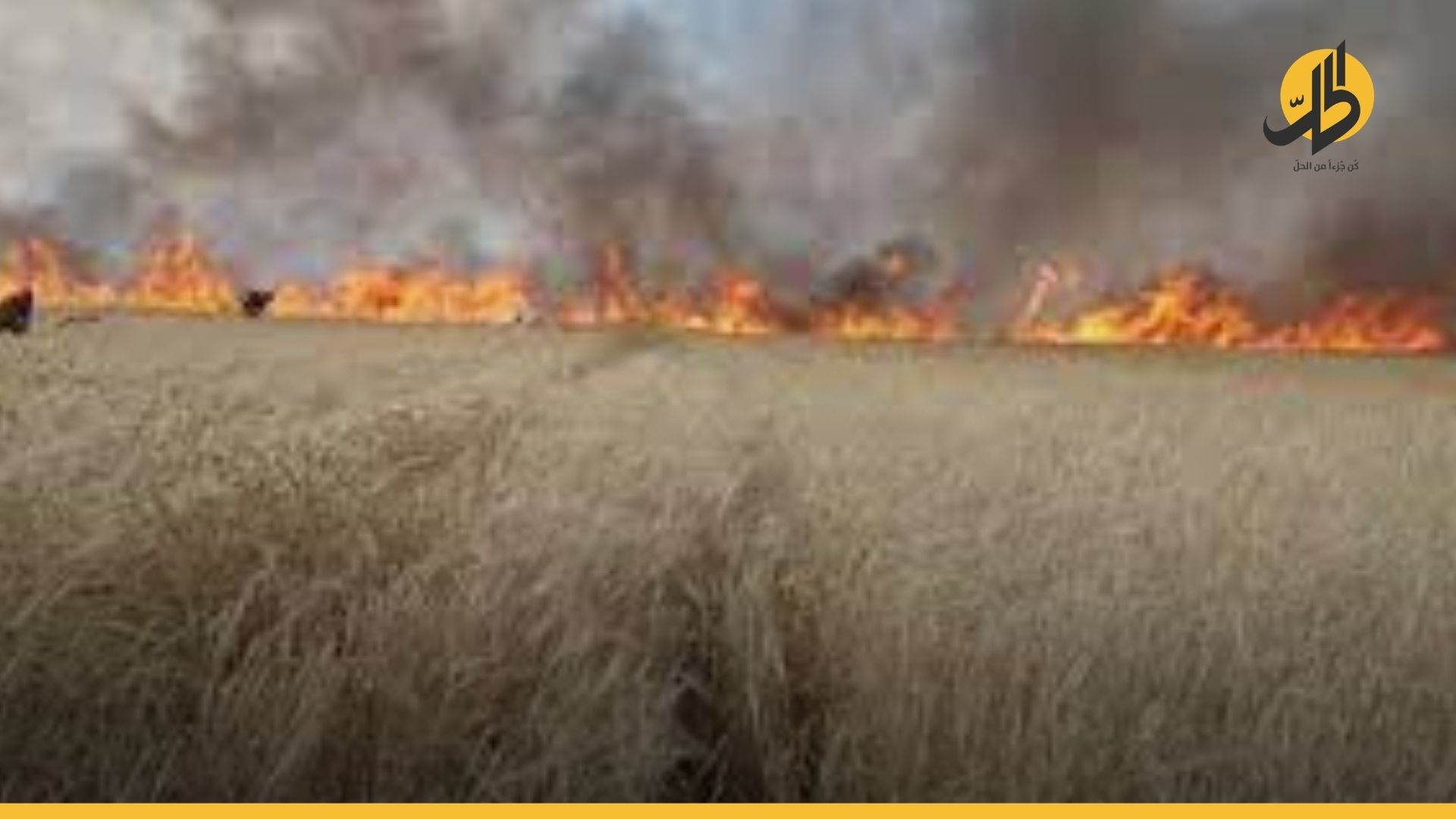 النيران تلتهم أكثر من 74 أرض زراعية وحراجية في طرطوس