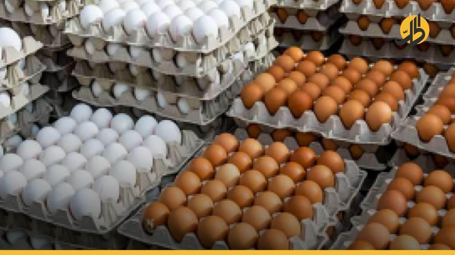 في عشر سنوات.. بيضة الدجاج من ليرتين إلى 300 ليرة في سوريا
