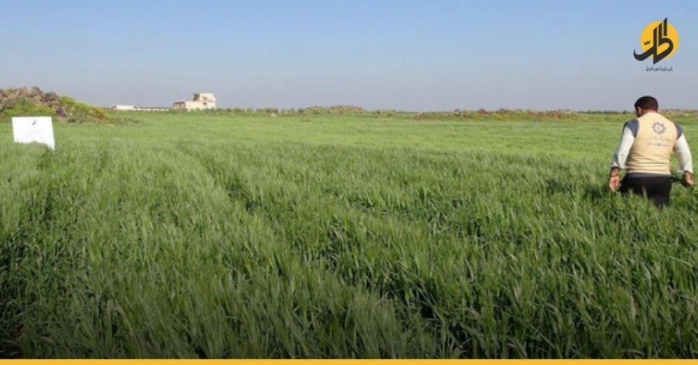 الزراعة في سوريا.. قطاع رابح دمرته سياسات فاشلة لعقود وعصفت به الحرب