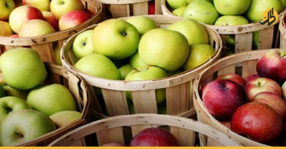 شروط مصرية تنذر برفض شراء ٨٠٪ من التفاح السوري
