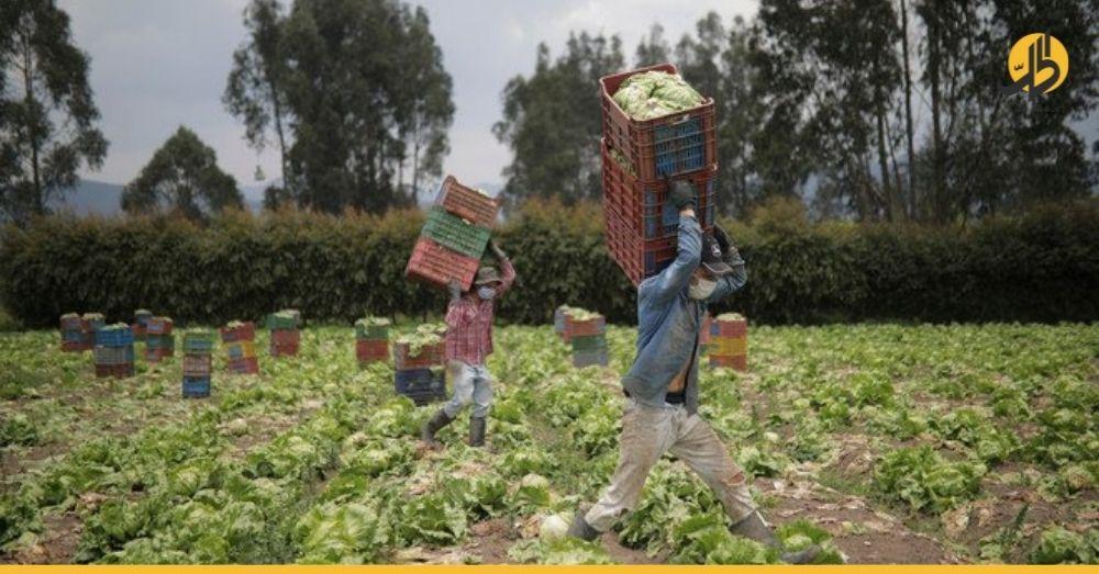 براتبٍ خيالي.. مزرعة في دولةٍ أوروبية تبحث عن عمّال لقطف الفواكه والخضروات