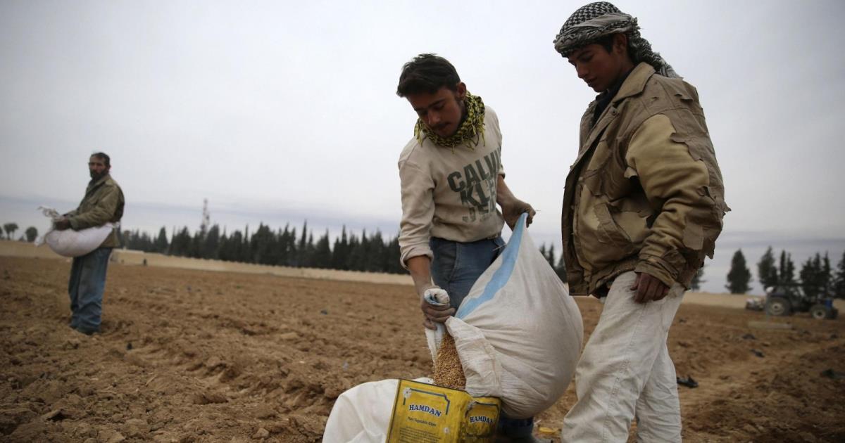 مؤسسة الحبوب في حكومة النظام تستورد 200 ألف طن قمح