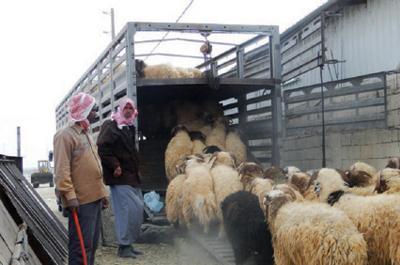 """نحو 5 شاحنات لحوم """"تُهرب"""" يومياً من سوريا إلى لبنان"""