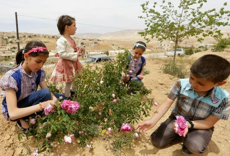 """""""أرض الورد"""" لم تعد كذلك..زراعة الزهور تتلاشى في سوريا و""""الصناعي"""" البديل الأوفر"""