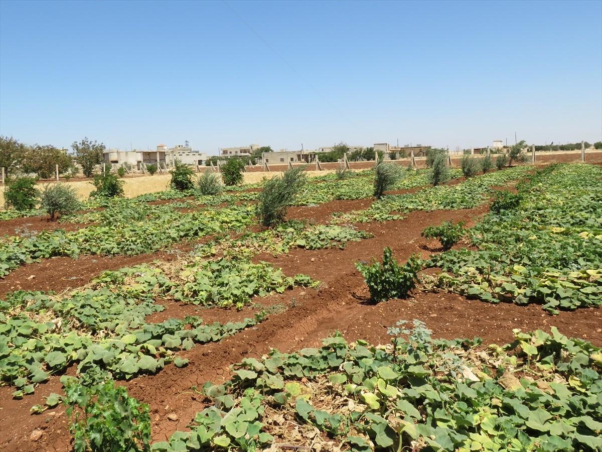 بعد خسارتها المليارات.. تحذيرات من تواصل تدهور قطاع الزراعة بسوريا