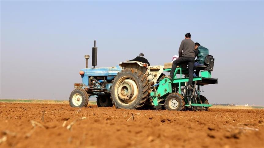 تركيا تطلق مشروعاً لحماية القمح السوري من الاندثار