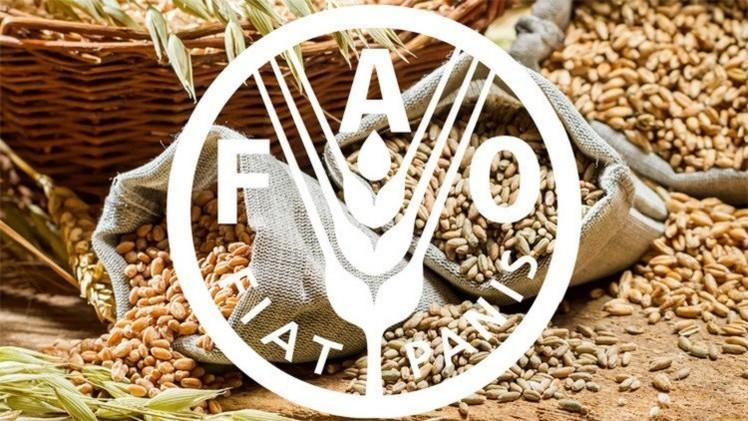 الفاو: الغذاء العالمي ارتفع في شهر آذار بنسبة 1.1 % عن شهر شباط