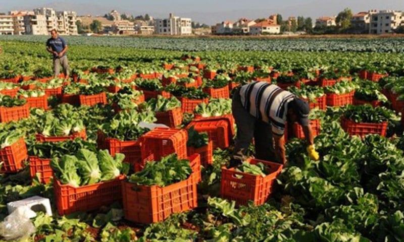 الأمم المتحدة تحذر من تراجع كبير في المحاصيل الزراعية السورية
