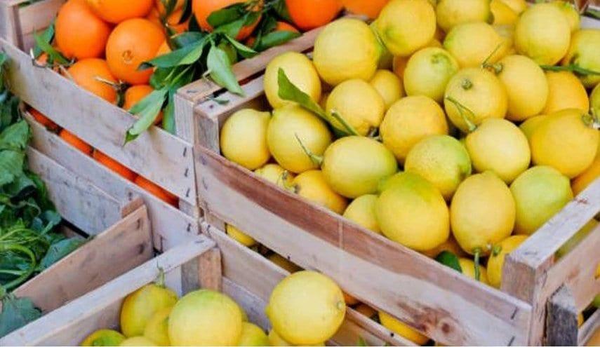 حكومة النظام تقلل من حجم تأثر السوق المحلية بتصدير الحمضيات إلى الأردن
