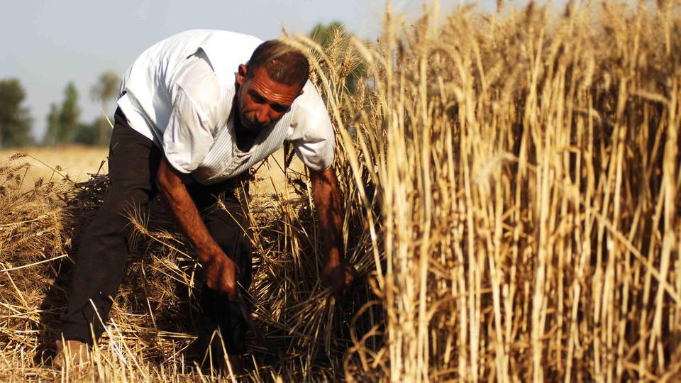 النظام ينفق كل موازنة عام ٢٠١٩ لربح «معركة القمح» ضد «الإدارة الذاتية»