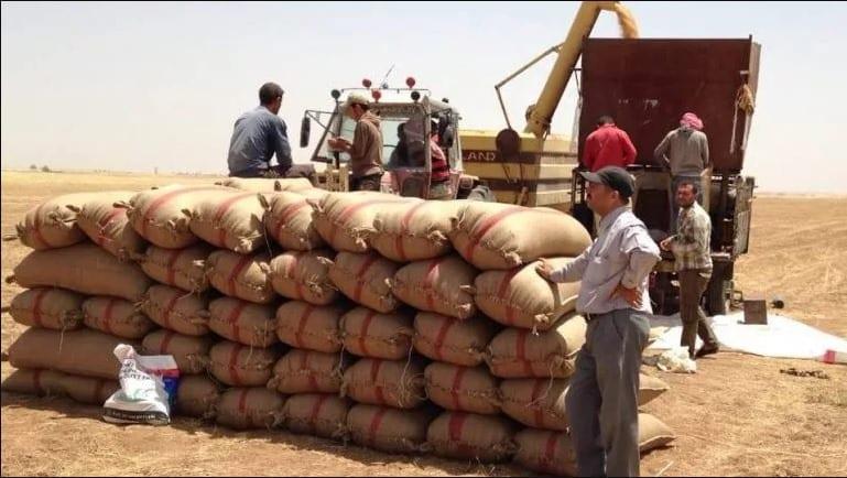 الإدارة الذاتية تحدد أسعار حصاد محصولي القمح والشعير في الحسكة