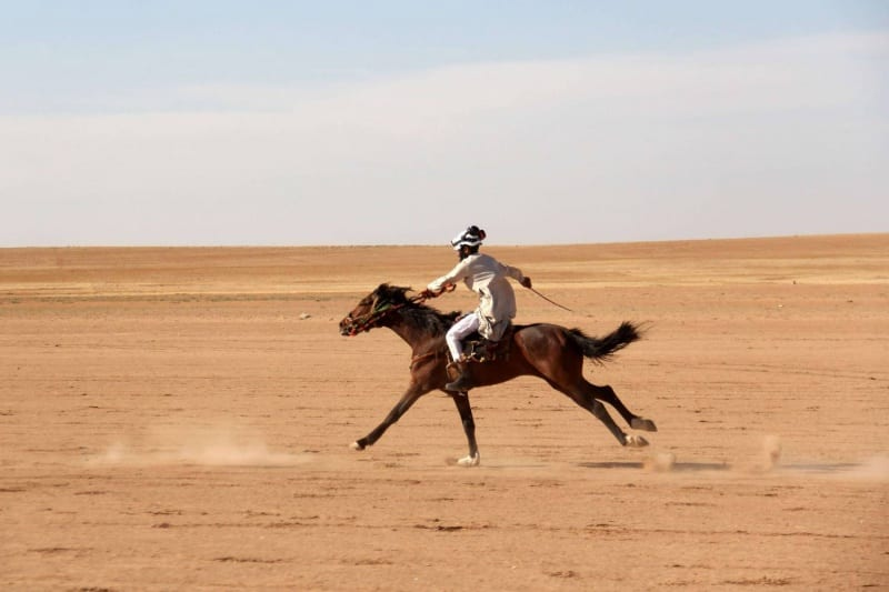 الخيول السورية الأصيلة تهريب وبيع بأبخس الأثمان للخارج