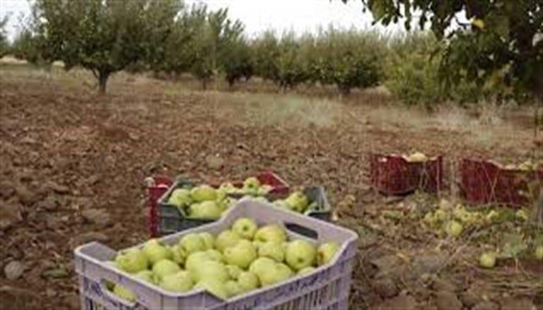 السويداء… الحكومة تحدد أسعار استلام محصول التفاح