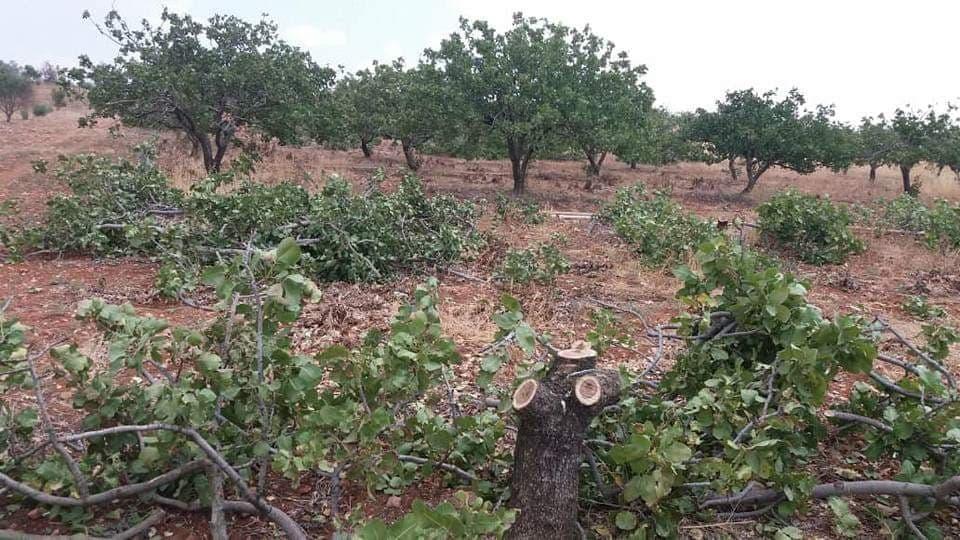 ريف حماة… التعفيش يطال الأشجار والآبار الارتوازية