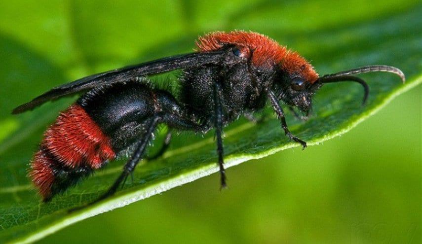 دراسة مثيرة للقلق: العالم فقد ربع حشراته