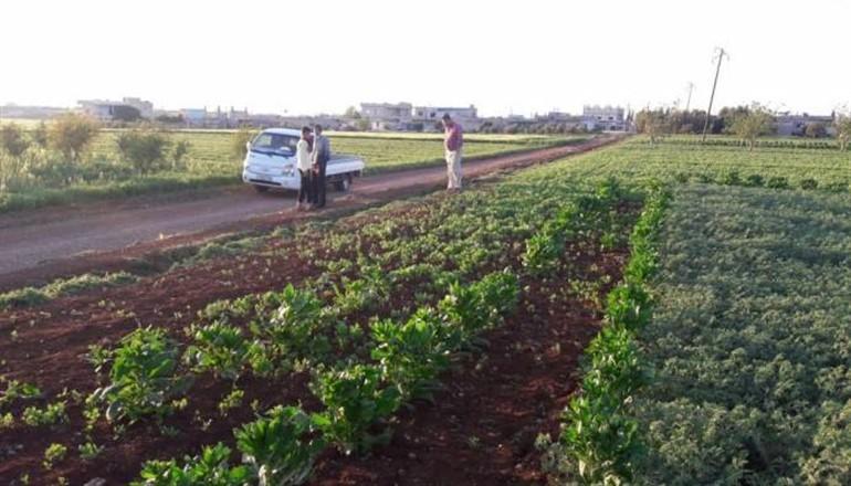 حمص… السماح للمزارعين ببيع محاصيلهم عبر سيارات مؤقتاً