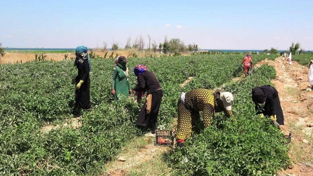 دير الزور… أضرار ضخمة في المحاصيل والمواشي بسبب الأمطار