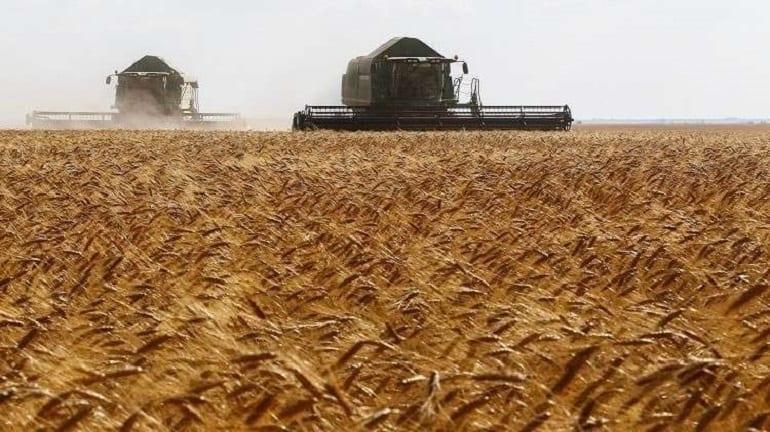 الحكومة السورية تحتكر شراء القمح وتحذِّر المزارعين!