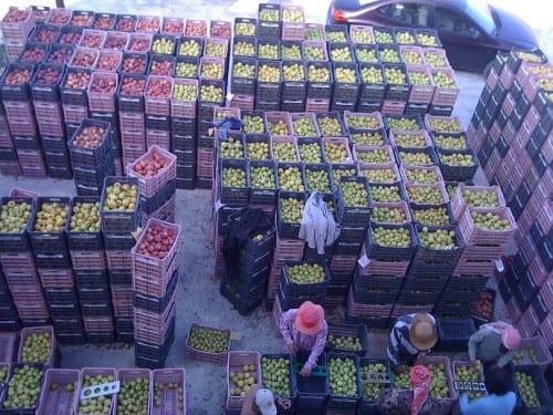 مصدرو التفاح يطالبون بتخفيض رسوم الشاحنات المارة عبر الأردن