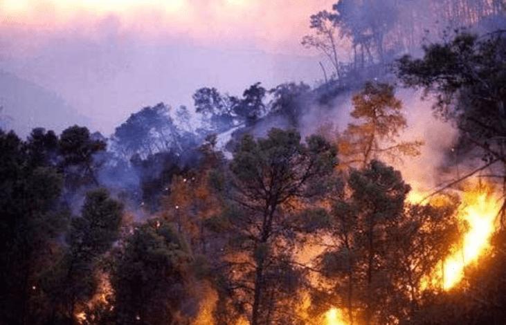 تقديرات أولية… 20 ألف دونم تضرر من حرائق جبال الغاب