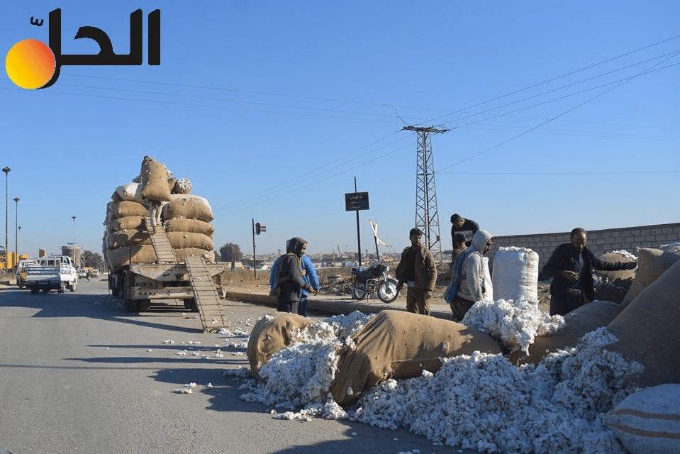 مزارعو القطن شمال شرقي سوريا تحت رحمة التجار!