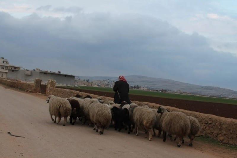 """ميليشيا «فاطميون» الأفغانية تسرق رعاة أغنام في وضح النهار بريف """"الرقة"""""""