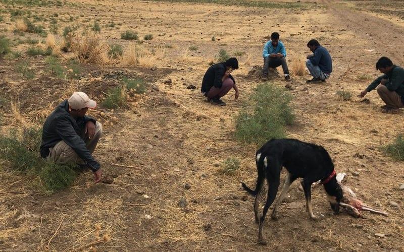 الشرطة التركيّة تعتقل خمسة لاجئين سورييّن بسبب صيد الأرانب