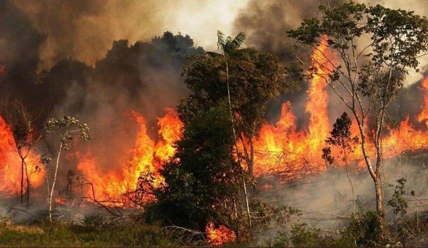 تجار أخشاب يبحثون عن مكاسب من الحرائق… واتحاد الفلاحين يحذِّر!