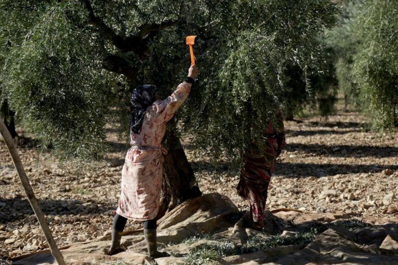 إتاوات الفصائل المسلّحة ترهق المزارعين والأهالي في عفرين
