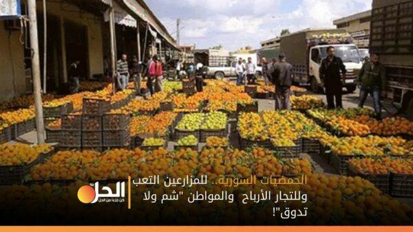 """الحمضيات السورية.. للمزارعين التعب وللتجار الأرباح والمواطن """"شم ولا تدوق""""!"""