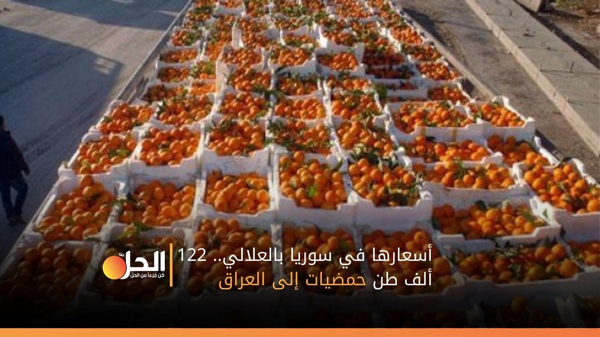 أسعارها في سوريا بالعلالي.. 122 ألف طن حمضيات إلى العراق